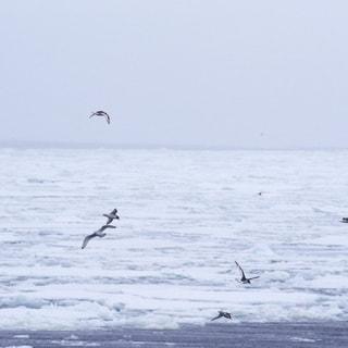 【2018.12.13】広がる海氷の景色